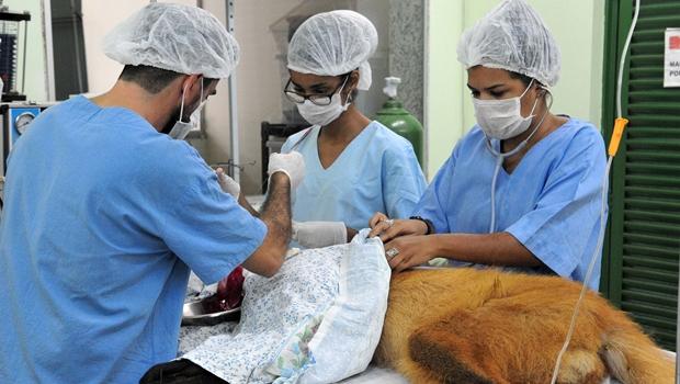 Conselho pede suspensão da abertura de novos cursos de veterinária no Brasil