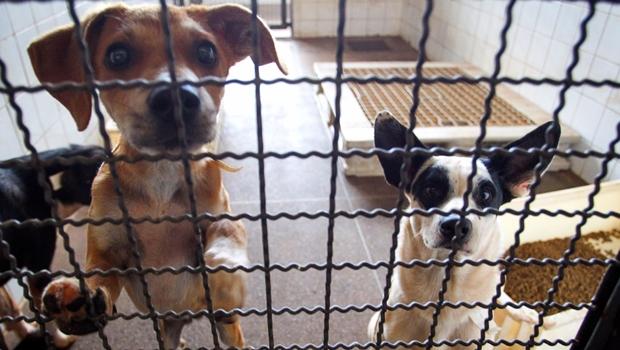 Vereador articula implantação de delegacia de proteção aos animais