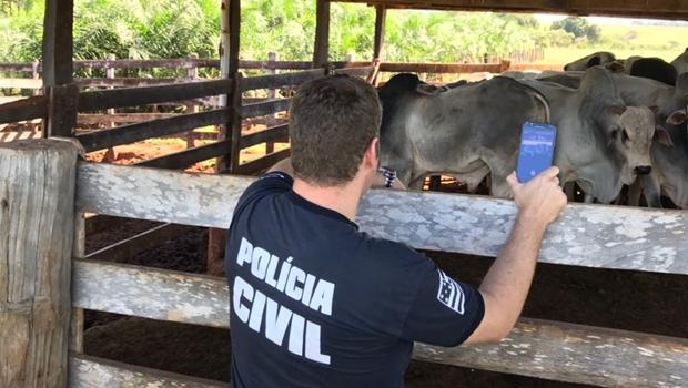 Polícia Civil prende quatro pessoas por roubo de gado em Goiás