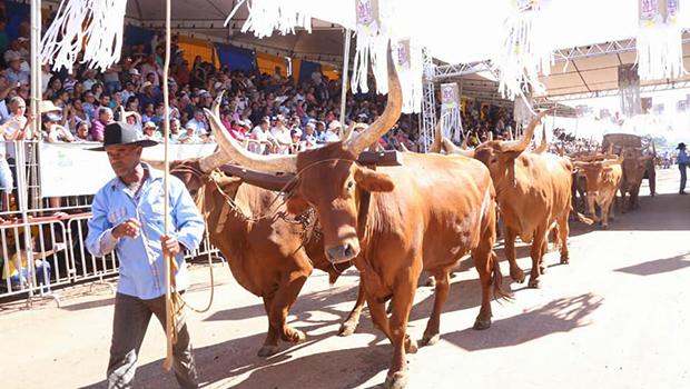 Desfile de carros de boi evidencia tradição  dos 175 anos da Romaria com grande público