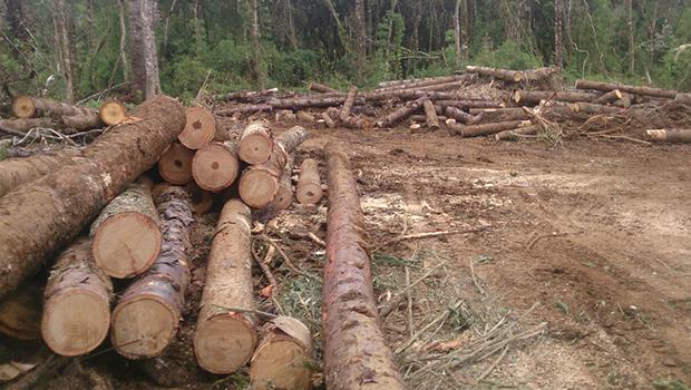 Operação nacional confirma desmatamento irregular em cinco cidades de Goiás