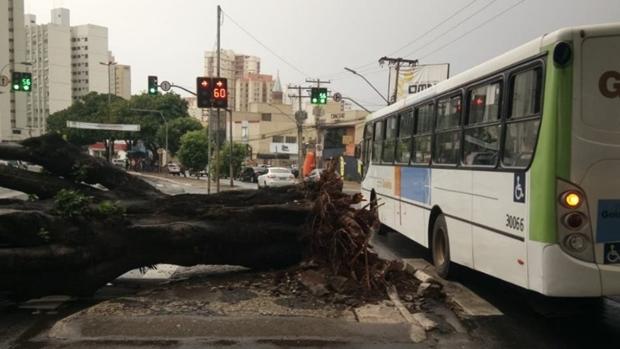 Anel interno da Praça Cívica é interditado após queda de árvore