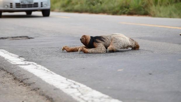 Projeto que protege animais silvestres em rodovias é aprovado em definitivo na Alego