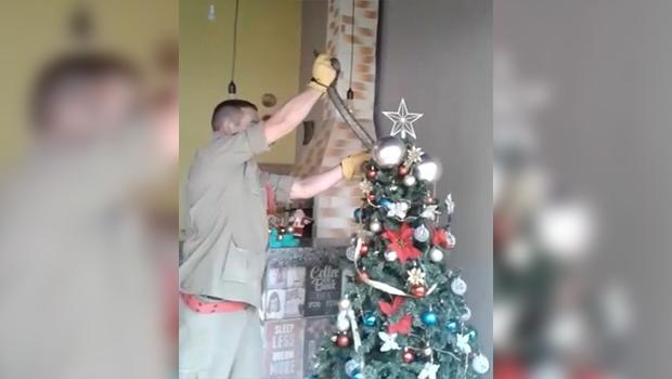 Cobra é encontrada por moradores de Inhumas em árvore de Natal