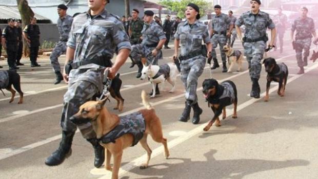 Batalhão de Choque seleciona cães para adestramento gratuito