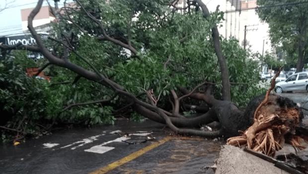 Redes sociais registram estragos das chuvas desta tarde, em Goiânia