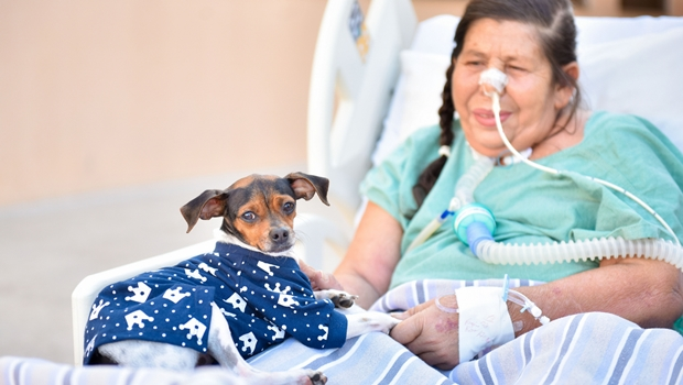 Paciente internada em Goiás se emociona ao receber visita de animal de estimação