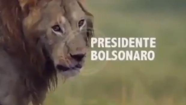 """Bolsonaro pede desculpas ao STF por vídeo com leão e hienas: """"Erramos e haverá retratação"""""""