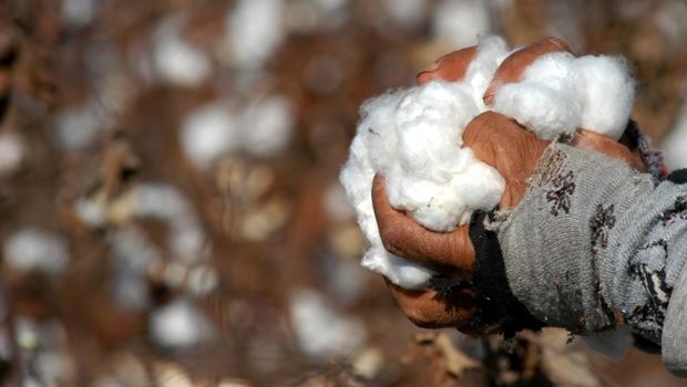 Exportações goianas registram aumento superior à 70% entre setembro e outubro