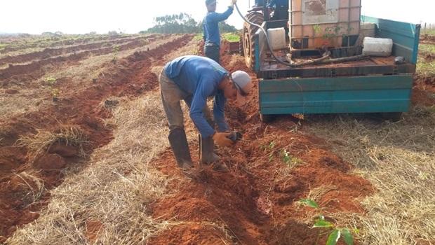 Após queimadas, João Leite recebe 250 mil mudas para reflorestamento