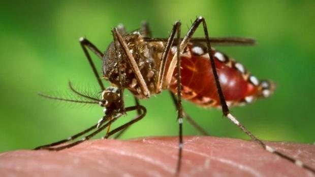 Em meio a pandemia causada pela Covid-19, dengue também é motivo de preocupação