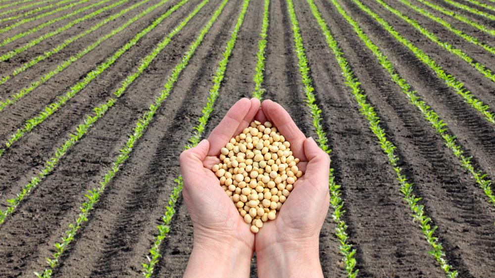 Goiás possui a quarta maior área plantada de grãos do país, aponta IBGE