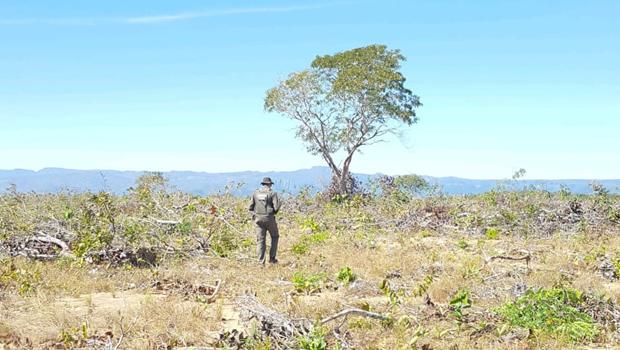 Fiscalização encontra mais mil hectares desmatados em Cavalcante