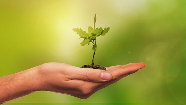 'Virada Ambiental' quer levar plantio de espécies vegetais nativas a 100% dos municípios goianos