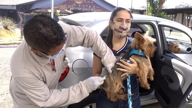 Vacinação antirrábica chega a mais bairros neste sábado