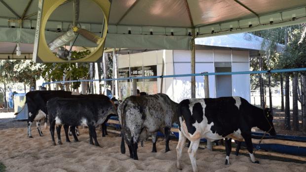 Agrodefesa adota medidas de flexibilização em eventos pecuários