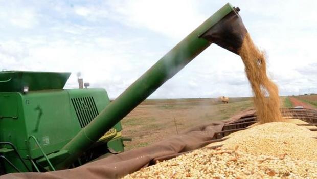 Goiás lidera produção de sorgo no país com 1,3 milhão de toneladas do grão
