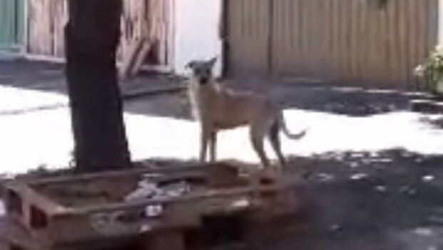Cachorro abandonado há 16 dias em casa no Jardim Europa é resgatado
