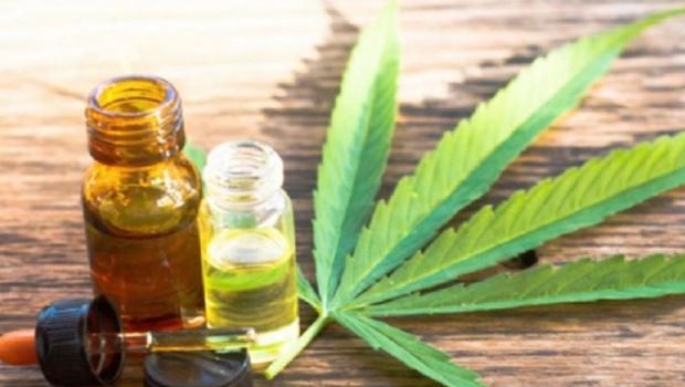Cannabis medicinal é regulamentada, mas pacientes ainda não têm acesso