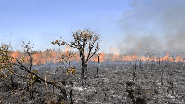 União e o Ministério do Meio Ambiente enfrentam processo por plano climático  nacional desatualizado e descumprimento da PNMC
