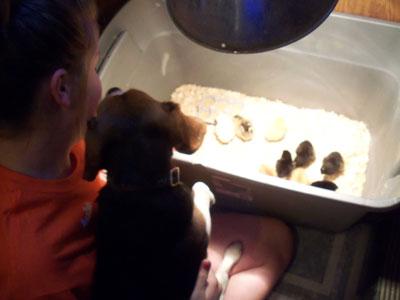 Chicks-Gracie