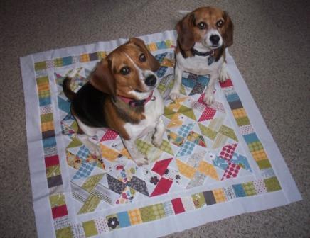 Kelli-dogs