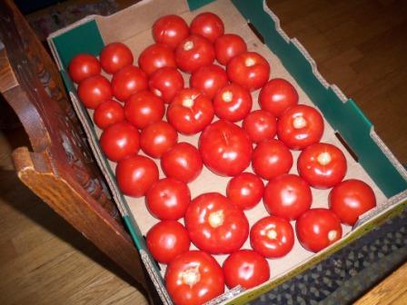 tomatoesforsalsa