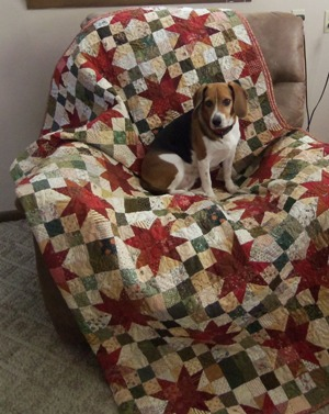 Puppy with Quilt 2