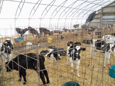 Whole Barn 2