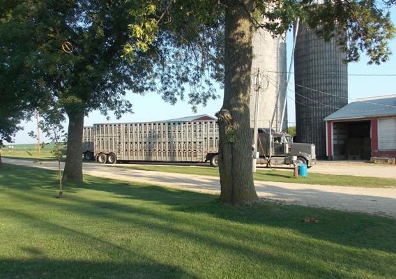 Trucks-4-5