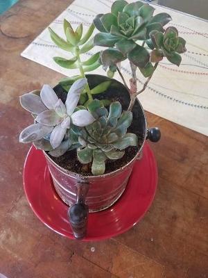 Succulents 3 (300x400)