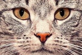 Yo te veo. La mirada del gato Buberiano