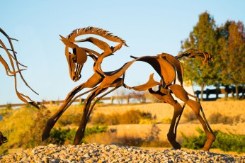 Smaller-Horse-Fichter-2305