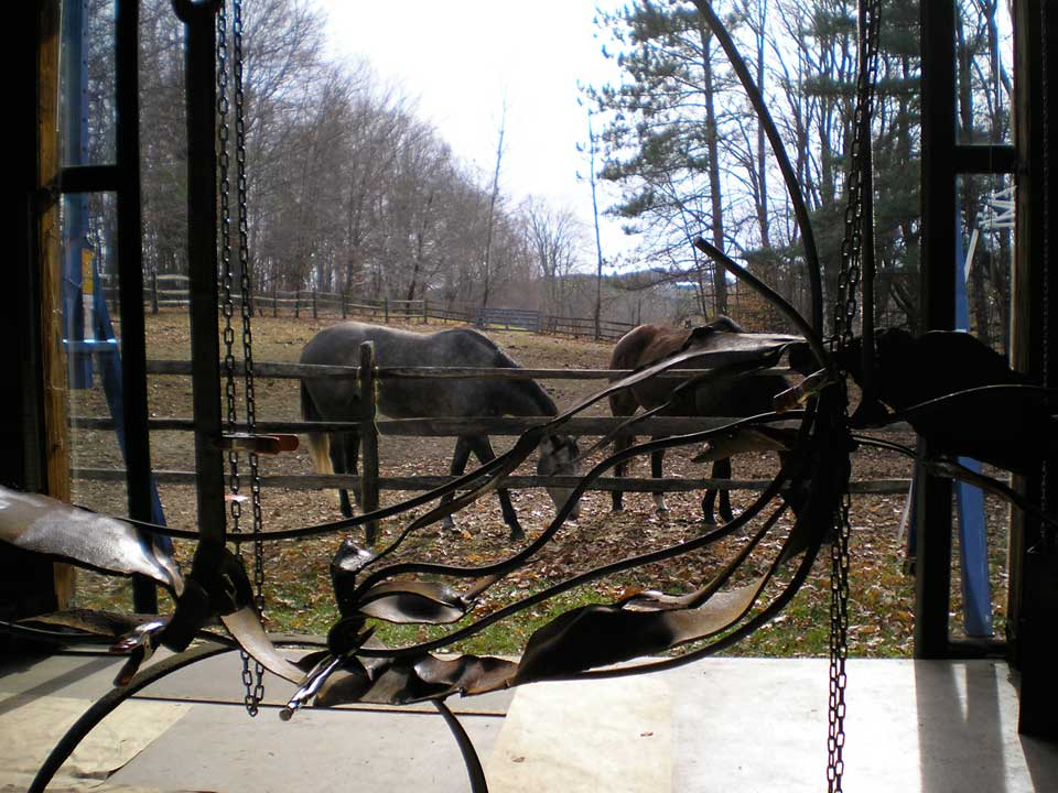 studio-shot-with-horses-outside-web