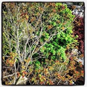 Brooklyn trees
