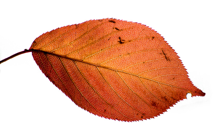 Even something that has a very shallow depth, like this leaf, can benefit from this technique