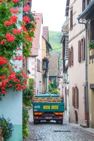 Riquewihr wine harvest time.