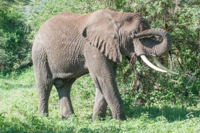 The Crater is an ideal retreat for aging bull elephants