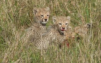 Responsible Tourism Practices Enhance Kenya Safari Experience