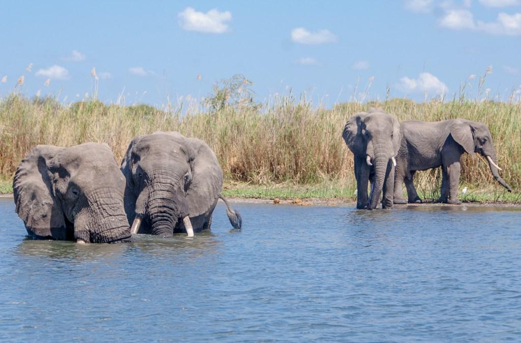 Malawi - Liwonde National Park
