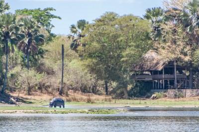 Mvuu Lodge Overlooks the Lagoon