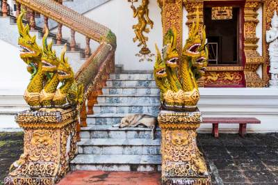 These fierce Nagas get a hand from  a resident canine to protect Wat Saen Fang.