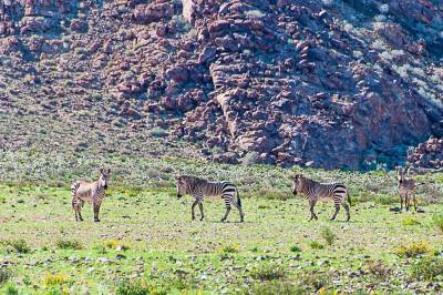 On the way to the Kuiseb Pass, we come across our first zebras.