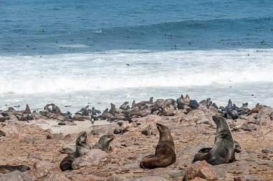 Cape Cross-Seals.