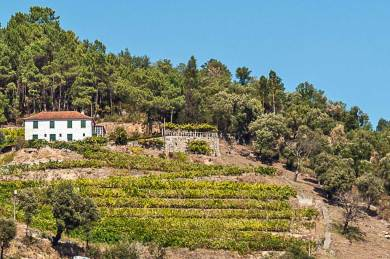 Douro-Terraced vineyards.