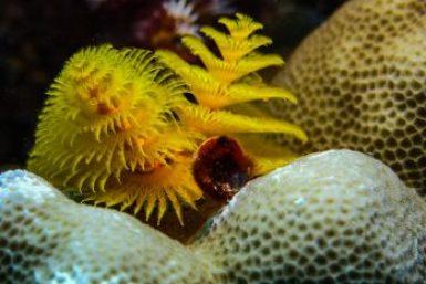 Bora Bora-Coral.