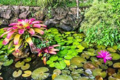 Moorea-water garden.
