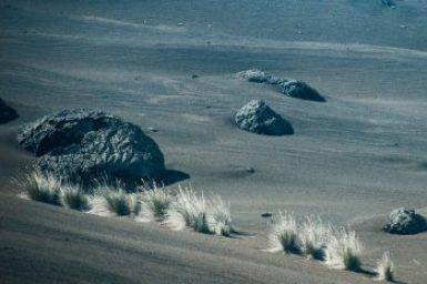 Timanfaya-Silver desert grass.