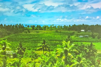 Projected on giant screens – The vineyards of Rangiroa, French Polynesia.