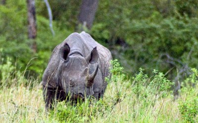 African Diaries — In the Land of Rhinos